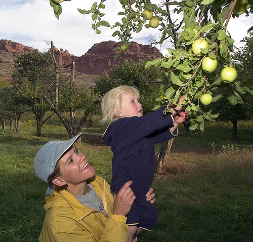 Jody Clark gives her daughter Rachel, 2,  a boost to reach some apples at Capitol Reef National Park Orchard.  Apple picking is September is a great family activity to combine with camping in the park.    Hartmann/photo   9/24/05