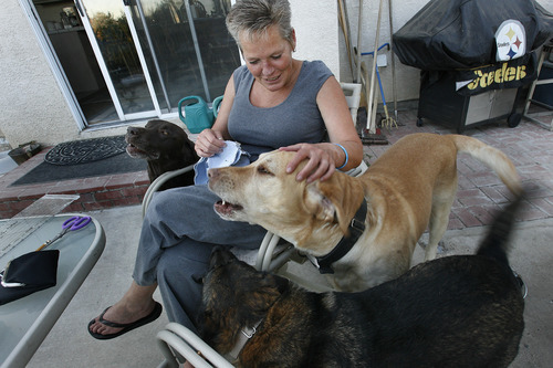 Scott Sommerdorf  |  The Salt Lake Tribune              Realtor Kristene Bigieri spends time with some of her five dogs that she and her husband Jim share their home with in Sparks, Nev.