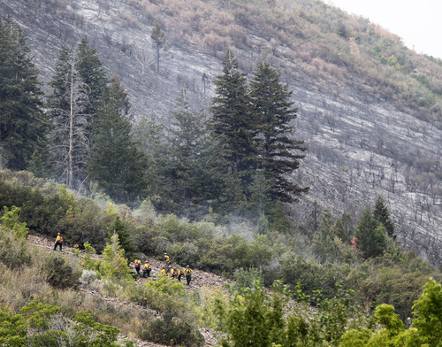 Al Hartmann  |  The Salt Lake Tribune Wildfire hand crews lays fire hose up steep terrain to fight the Whiskey fire in Daniel's Canyon east of Heber and just south of U.S Highway 40 Monday August 20.