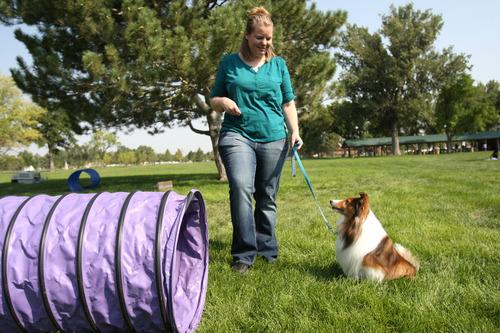 wilkinson lake sheepdog is magna students lifeline the salt lake tribune
