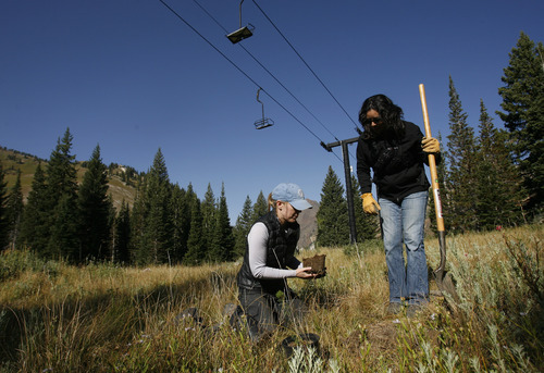 Rick Egan  | The Salt Lake Tribune   Amy Collins, Tree Utah (left) and Maura Olivos, Alta ecologist,  plant  a tree at Alta ski resort, Saturday, September 8, 2012.  More than 50 volunteers helped Tree Utah and the Alta Environmental Center plant 1,800 plants and trees.