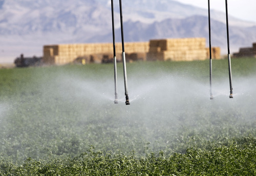 Al Hartmann     The Salt Lake Tribune Water sprays from an irrigation system onto an alfalfa field on the Dean Baker ranch on the Nevada-Utah state line. Western Utah has been hardest hit by the worst drought on record. The Bakers feel lucky because they can pump water from aquifers.