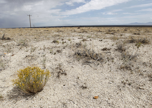 Al Hartmann     The Salt Lake Tribune Dry land stretches to the horizon near the town of Callao in western Utah. The drought that has choked 23 of Utah's 29 counties has hit western Utah hardest according to data from the National Climatic Data Center.