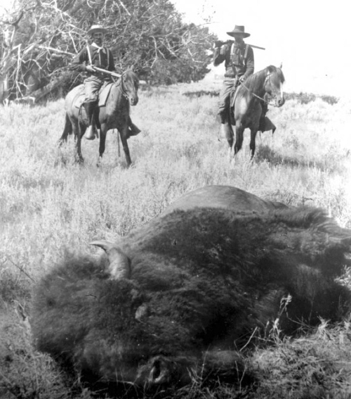 Buffalo hunters in Montana, 1882. Courtesy of Utah Historical Society