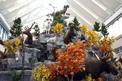 Chris Detrick  |  The Salt Lake Tribune An animal display at Scheels Saturday September 29, 2012. Scheels opened its 220,000-square-foot mega-sporting goods store in Sandy. Featuring a 16-car Ferris wheel rising toward a skylight, a 16,000-gallon double-arched salt water aquarium, a boating department, game centers and a focus on fashionable apparel, the store is meant to be a fun destination, said Dan Hermanson, an assistant store leader.