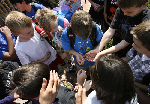 Scott Sommerdorf  |  The Salt Lake Tribune              Fifth graders from Liberty Elementary in Murray eagerly crowd in to get a look at a small snake that was found n a meadow at Sundance Resort during a