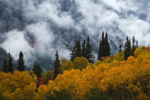 Chris Detrick  |  The Salt Lake Tribune Fall colors in Little Cottonwood Canyon on Sept. 25, 2012.