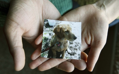 Leah Hogsten  |  The Salt Lake Tribune Autumn and Naveen Pammi hold a photo of Rusty Saturday, October 6 2012 in North Salt Lake. The family's golden retriever, Rusty, died suddenly in August as a pest company was spraying a hazardous herbicide at their neighbor's house next door. The incident has prompted the couple to speak up about the dangers of pesticides and support another valley resident's efforts to get Utah to adopt a neighbor notification law