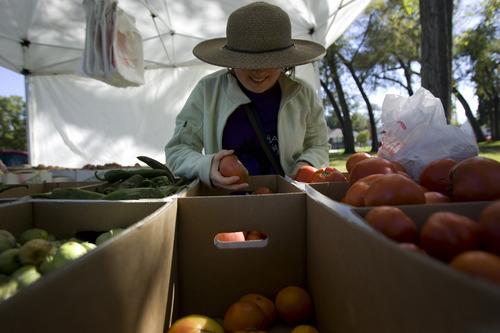 Kim Raff  |  The Salt Lake Tribune Melissa Snyder picks tomatoes at Larry Proctor's stand at the People's Market at the International Peace Gardens in Salt Lake City on Sunday, Oct. 14, 2012.