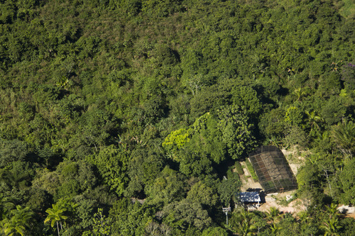 In this July 7, 2012 photo released by the Golden Lion Tamarin Association (AMLD), shows a tree nursery of native species saplings in the Atlantic Forest region of Silva Jardim, in Brazil's state of Rio de Janeiro. The state promise to plant 24 million trees would help further restore the swath of species-rich Atlantic forest that once covered much of Brazil's coast and ensure that the golden lion tamarin population, once near extinction, has enough room to thrive. (AP Photo/AMLD, Luis Paulo Ferraz)