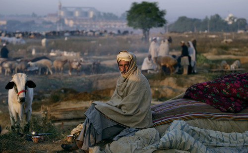 Pakistani livestock merchant, Ghulam Hassan, 60, waits for customers at a roadside livestock market as Muslims prepare for the upcoming holiday of Eid al-Adha, or