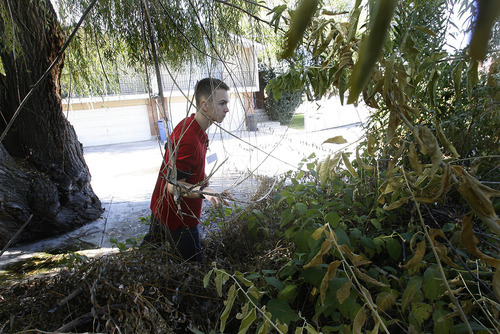 Scott Sommerdorf     The Salt Lake Tribune               Searcher Matthew Pearce searchers a wooded area for any sign of missing 80 year old Fritz Helland or his dog, as volunteers search neighborhoods north of 4500 South near 1500 East, Sunday, October 28, 2012. Hundreds of serchers spread out in various neighborhoods in Millcreek and adjoining areas.