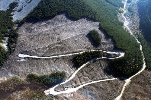 Rick Egan  |  The Salt Lake Tribune   Cut blocks of infested trees represent an attempt to halt the devastation by the mountain pine beetle, in the mountains near the border of Alberta and British Columbia, Canada, Friday, September 28, 2012.