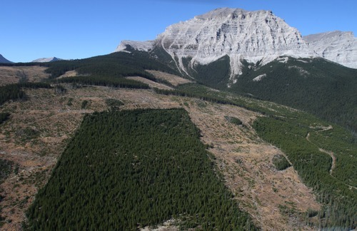 Rick Egan  |  The Salt Lake Tribune   Cut blocks of infested trees were cut down to try to halt the devastation by the mountain pine beetle in the mountains near the border of Alberta and British Columbia, Canada, as seen in this photo from Friday, September 28, 2012.