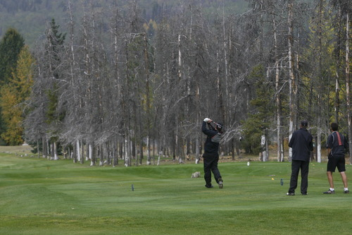 Rick Egan  |  The Salt Lake Tribune   Due to attacks by the mountain pine beetle, thousands of trees were chopped down at the Prince George Golf and Curling Club in British Columbia. This row of trees was left standing to prevent golf balls from going into traffic.