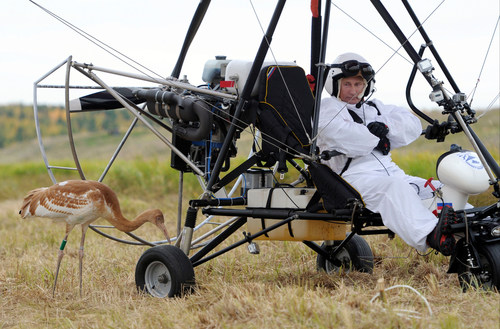 "FILE - In this Wednesday Sept. 5, 2012 file photo, Russian President Vladimir Putin waits in a motorized hang glider next to a Siberian white crane, on the Yamal Peninsula, in Russia. On Thursday, Nov. 1, 2012, Interfax reported that Putin's spokesman Dmitry Peskov said the president had pulled a muscle. ""It happened before Vladivostok. He was suffering from muscle pain then"", Peskov said. Peskov told state news agency RIA Novosti this was an old injury and denied it was caused by his flight with cranes. (AP Photo/RIA-Novosti, Alexei Druzhinin, Presidential Press Service, File)"