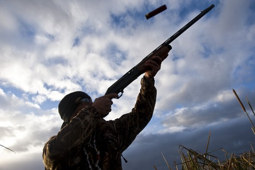 Chris Detrick  |  The Salt Lake Tribune  Carl Taylor shoots a pintail duck while duck hunting with his dog JB in Farmington Bay Tuesday November 23, 2010.