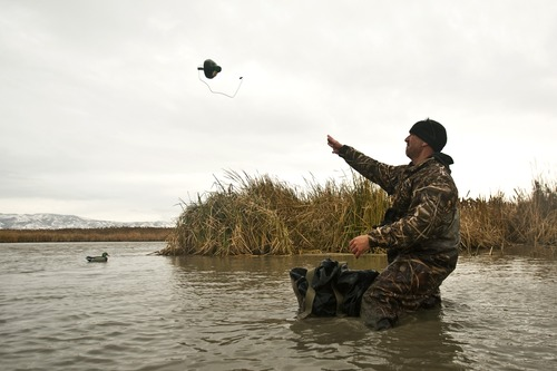 Chris Detrick  |  The Salt Lake Tribune  Carl Taylor throws out duck decoys while duck hunting with his dog JB in Farmington Bay Tuesday November 23, 2010.