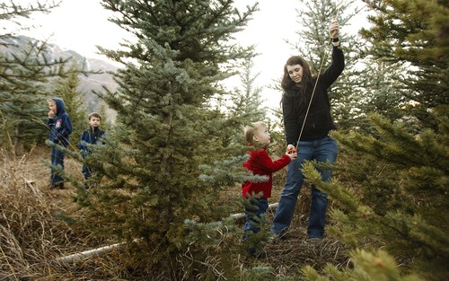 Families Ask Christmas Tree Oh Christmas Tree Where Art Thou  - Becks Christmas Tree Farm