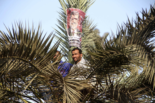 Supporters of Egyptian President Mohammed Morsi perch in a tree during a rally in front of Cairo University in Cairo, Egypt, Saturday, Dec. 1, 2012. Tens of thousands of people waving Egyptian flags and hoisting large pictures of the president are demonstrating across Egypt Saturday in support of Morsi and Islamic law. The rallies, organized by the Muslim Brotherhood, are seen as a test of strength for Islamists seeking to counteract large opposition protests held this past week by liberal and secular groups who the Brotherhood say do not represent the vast majority of Egyptians. (AP Photo/Ahmed Ramadan)