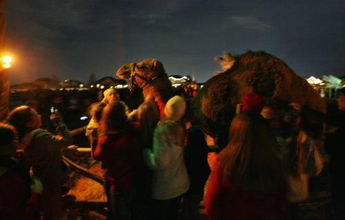 Steve Griffin | The Salt Lake Tribune Visitors photograph and pet a camel as they visit the living Nativity at the River View LDS Stake at 12100 S. 700 West in Draper, Utah, on Wednesday, Nov. 28, 2012.