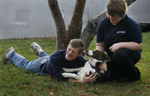 "Scott Sommerdorf  |  The Salt Lake Tribune               Volunteers Andy Finnegan and Chelsea Phillips play with ""Shiloh"" at the Salt Lake County Animal Services, Thursday, November 29, 2012. They volunteer at the center almost every day between going to school and working."