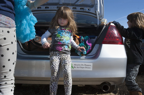 Steve Griffin    The Salt Lake Tribune After finding her blue tutu LuLu Badger slips from the trunk of her car as her family reunites with Ashley Maynard's family at a corn maze in  Bluebell, Utah Saturday October 27, 2012. Maynard, 12, died in 2010. Maynard's family donated her organs and her liver saved LuLu's life.
