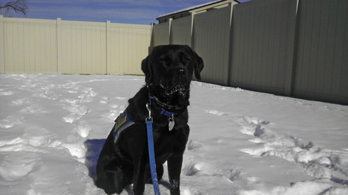 Courtesy Tonya Murray Wink is a 2-year-old service dog currently based at the Uintah and Daggett County Children's Justice Center. Administrators use her to help children feel comfortable when discussing difficult, crime-related topics.
