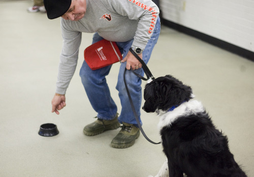 Kim Raff  |  The Salt Lake Tribune Steve Seamons, a Navy Vietnam veteran, works with his dog, Jaxx, during a Canines With A Cause class at Northwest Recreation Center in Salt Lake City on December 21, 2012. Canines With A Cause is a non-profit that trains veterans and their dogs.