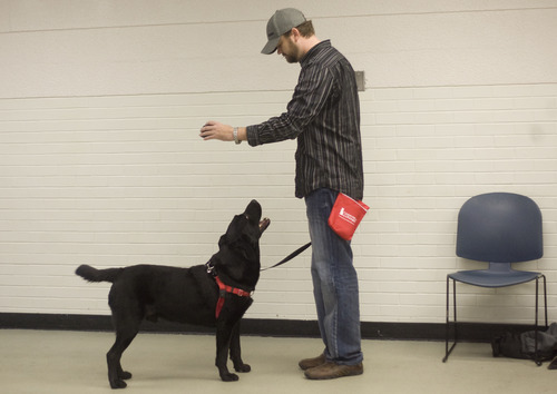 Kim Raff     The Salt Lake Tribune Austin Cochran, an Air Force veteran, works with his dog, Grizz, during Canines With A Cause class at Northwest Recreation Center in Salt Lake City on December 21, 2012. Canines With A Cause is a non-profit that trains veterans and their dogs.