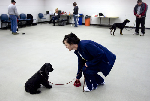 Kim Raff  |  The Salt Lake Tribune Renee Olsen, an Army National Guard veteran of Desert Storm, works with her dog, Lucy, during an exercise at Canines With A Cause class at Northwest Recreation Center in Salt Lake City on December 21, 2012. Canines With A Cause is a non-profit that trains veterans and their dogs.
