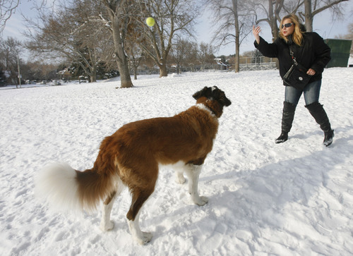 Rick Egan  | The Salt Lake Tribune   Magda Allbright plays with her dog Bubba, at Lindsey Gardens dog park in the Avenues, Wednesday, January 2, 2013. The Greater Avenue Community Council is considering a petition that would expand the off-leash area of Lindsey Gardens.