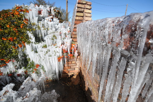 Icicles develop along a brick wall and on bushes as water from the sprinkler system freezes at a home on the corner of Willow Street and Peach Avenue in Hesperia, Calif, on Monday, Jan. 14, 2012. The extreme chill in the West comes as the eastern U.S., from Atlanta to New York City, is seeing spring-like weather. (AP Photo/The Victor Valley Daily Press, David Pardo)
