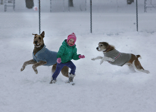Scott Sommerdorf   |  The Salt Lake Tribune Savannah Bates, 4, throws a ball, while two very excited dogs wearing sweaters play at the dog park at Herman Franks Park on 700 East on Friday.