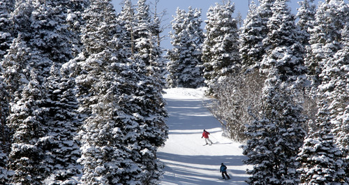 Steve Griffin | The Salt Lake Tribune  Skiers brave sub-zero temperatures as they ski through snow covered in pines at Park City Mountain Resort on Monday January 14, 2013.