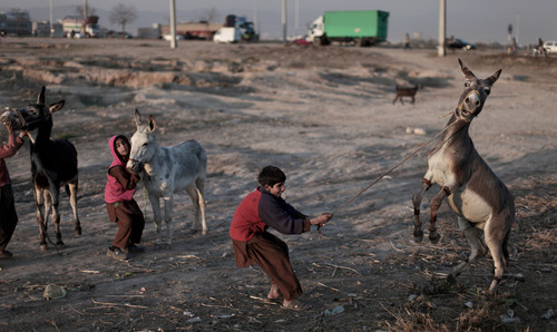 A Pakistani boy, holds on into his donkey after loosing control,  while he and others walk in a field toward the main road on the outskirts of Islamabad, Pakistan, Thursday, Jan. 24, 2013. (AP Photo/Muhammed Muheisen)