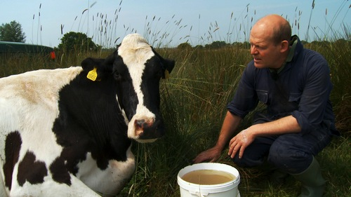 """Steven Hook, a maverick dairy farmer, and his 55 unruly cows, are the stars of """"The Moo Man,"""" one of the films in Sundance's World Cinema Documentary Competition. Courtesy Sundance Film Festival"""