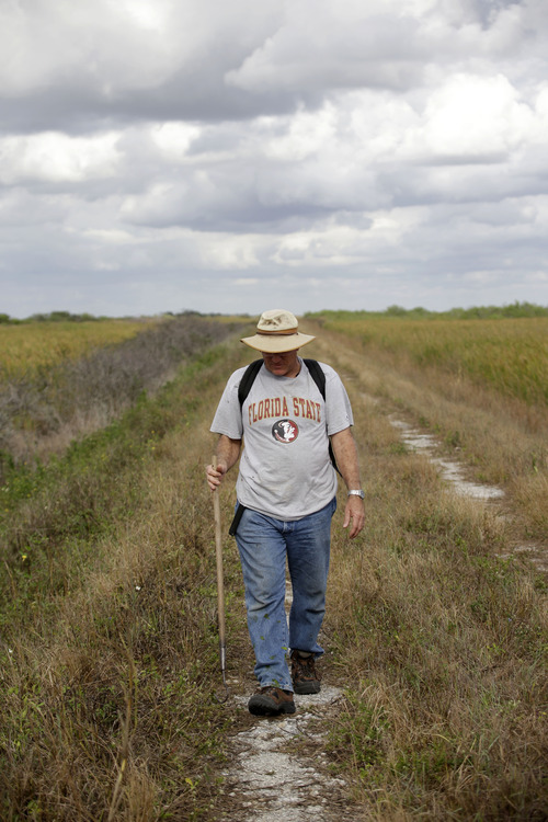 "In this Jan. 16, 2013 photo, Jim Howard of Cooper City, Fla., walks along a levee in the Florida Everglades in search of pythons as part of the month long ""Python Challenge."" Wildlife officials say more than 1,000 people signed up for the competition that began Saturday and ends Feb. 10. The state hopes the hunters will help researchers collect more information about the pythons. The large snakes are an invasive species and are considered a menace to Florida's swamplands. (AP Photo/Wilfredo Lee)"