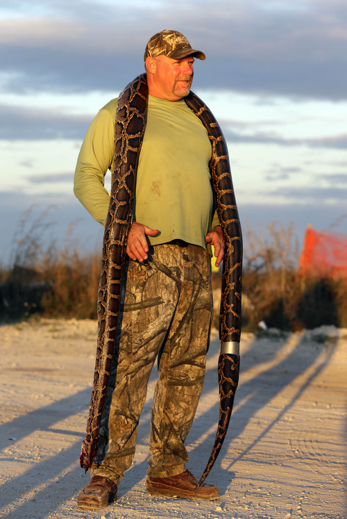 "Bill Booth of Bradenton, Fla. wears a dead Burmese python he caught around his neck as he shows it to journalists, Saturday, Jan. 19, 2013 in the Florida Everglades as part of the monthlong ""Python Challenge."" Booth's snake measured an unofficial 11.59 feet (353.5 cm) Wildlife officials say more than 1,000 people signed up for the competition that began Jan. 12 and ends Feb. 10. The state hopes the hunters will help researchers collect more information about the pythons. The large snakes are an invasive species and are considered a menace to Florida's swamplands. (AP Photo/Wilfredo Lee)"