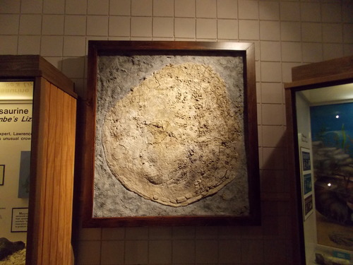 Courtesy photo This giant clam on display in the Prehistoric Museum at Utah State University-Eastern was discovered near Green River last April.