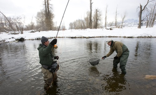 Al Hartmann | Tribune file photo  Fsihing guide Ken Mahal, left, catches a brown trout in the chilly water of the Middle Provo River as Kevin Foley nets the fish.