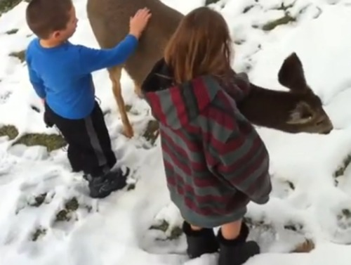 """A YouTube video titled """"Dasher Came to Visit!"""" posted on Christmas Eve shows two, and eventually three, young children playing with and petting a doe mule deer in their front yard."""