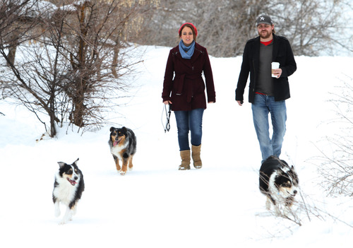 Rick Egan  | The Salt Lake Tribune   Rob Roundy walks the Dugway trail at Parley's Nature Park with his wife, Lindsi McCoard Roundy and their dogs Trixy, Ajax, and Xoe,  Wednesday, February 13, 2013. Lindsi is a third year medical student at the University of Utah, recently diagnosed with Multiple Sclerosis.