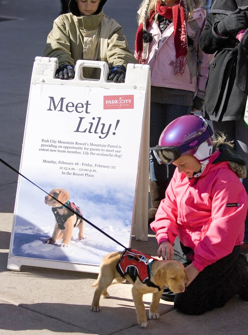 "Paul Fraughton  |   Salt Lake Tribune Mia Richerson,age 9,  meets ""Lily"", Park City Ski Resort's  new avalanche dog in training, who was on  the resort's plaza where she was an instant hit with skiers who petted her and posed with her for photos.  Tuesday, February 19, 2013"