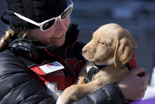 "Paul Fraughton  |   Salt Lake Tribune ""Lily"", Park City Ski Resort's  new avalanche dog in training, is held in her trainer Sierra Prother's arms. Lily was on the resort's plaza where she was an instant hit with skiers who petted her and posed with her for photos.  Tuesday, February 19, 2013"