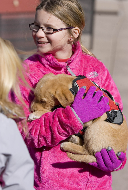 "Paul Fraughton  |   Salt Lake Tribune ""Lily"", Park City Ski Resort's  new avalanche dog in training snuggles into the arms of Jennifer Anponacci,age9. Lily was on the resort's plaza where she was an instant hit with skiers who petted her and posed with her for photos.  Tuesday, February 19, 2013"