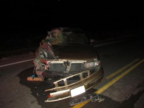This photo from the Utah Highway Patrol shows what happened after a car in Toole County struck two horses that escaped onto State Road 36 on March 22, 2013.. Two people were hurt and both horses died.