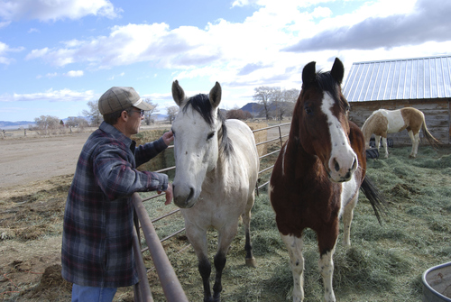 Brian Maffly | The Salt Lake Tribune  Dave Baker, a third-generation Snake Valley rancher, greets his ranch hands' horses.