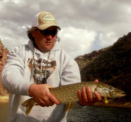 Courtesy photo Darren Bowcutt of Western Rivers Flyfisher with a northern pike he landed recently while fishing the Green River below Flaming Gorge Dam. A new regulation requires anglers to kill all northern pike, walleye and smallmouth bass landed on the Green River.
