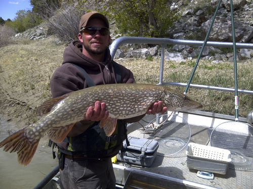 Steve Keddy holding a northern pike caught during nonnative fish removal. Courtesy photo